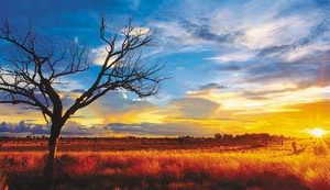 CAR4059287 002 300x173 - Puzzle 1000 pcs - Panorama Desert Oak at Sunset